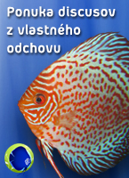 discus odchov
